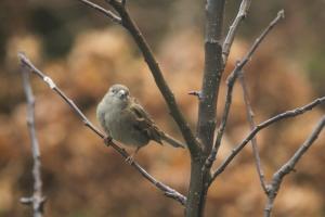 1379619_sparrow